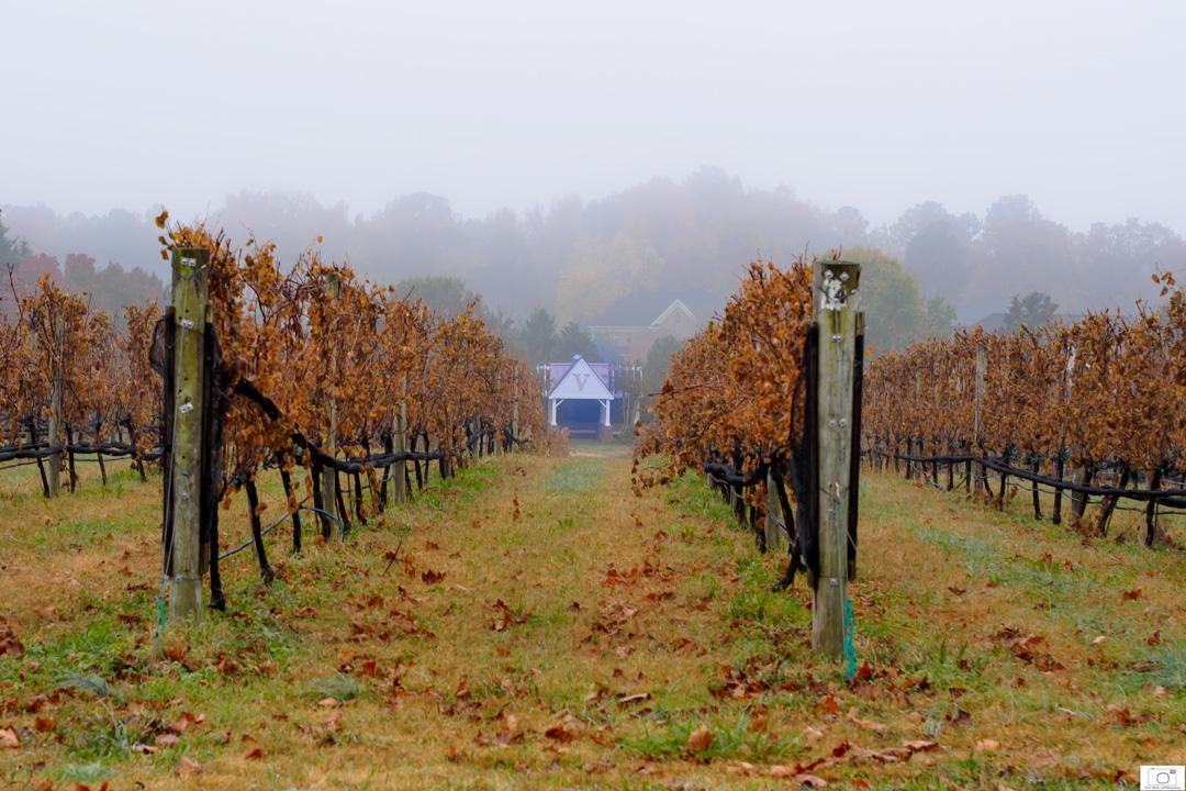 The Gazebo In The Vineyards - November 2014