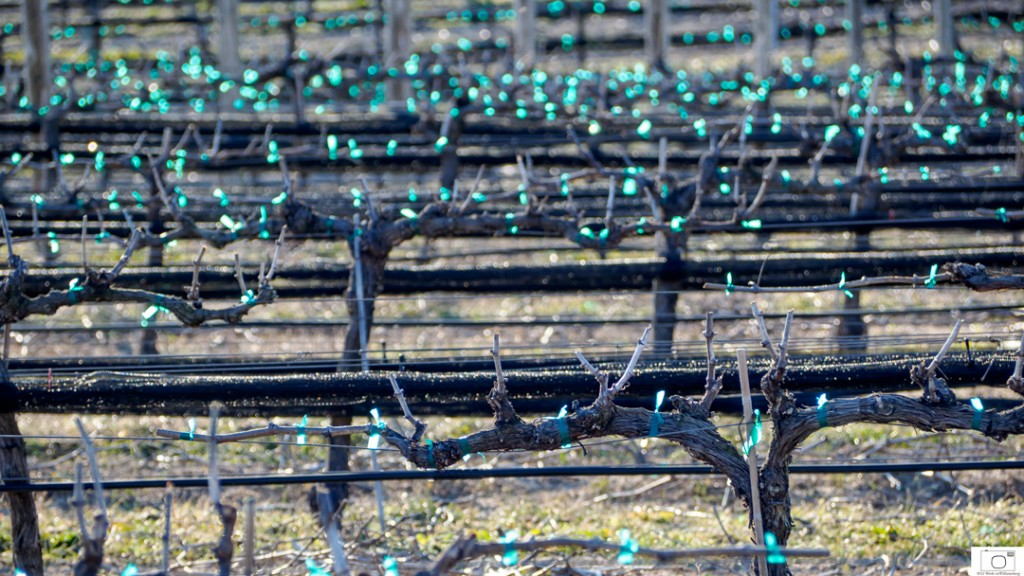2016-2-29-Vinyards-Sparkle-13-1080-80-1024x576.jpg
